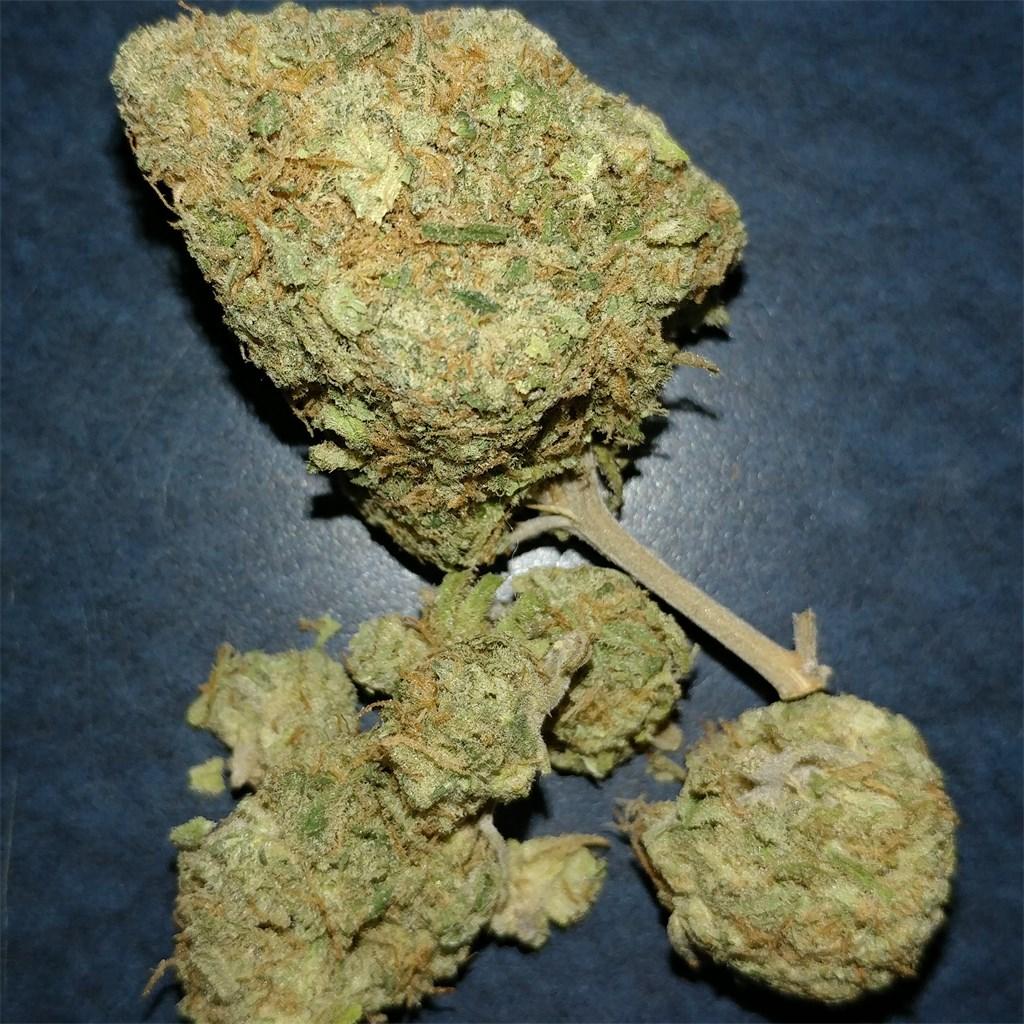 Lamb's weed
